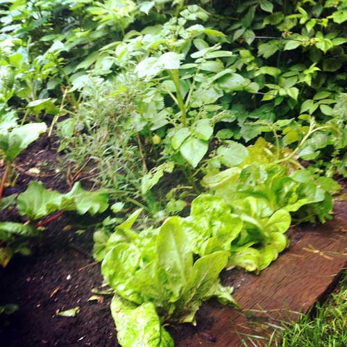 Small Year Round Veg Patch: Some Fun Gardening Experiments For Kids (big Kids Too